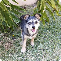 Adopt A Pet :: Kiwi - San Dimas, CA