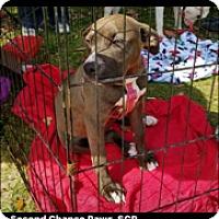 Adopt A Pet :: ALLIE - Crowley, LA