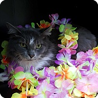 Adopt A Pet :: Emile - Albemarle, NC