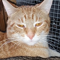 Adopt A Pet :: Jack - Eastpointe, MI