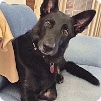 Adopt A Pet :: Kaine - Marion, AR