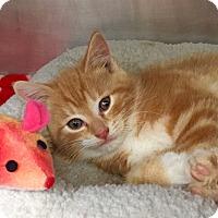Adopt A Pet :: Bernie - Marlton, NJ