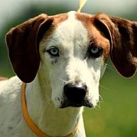 Adopt A Pet :: June - Morganville, NJ