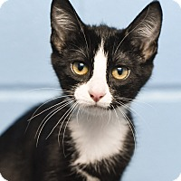 Adopt A Pet :: Tinker - Nashville, TN