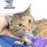 Adopt A Pet :: Amanda - Knoxville, TN