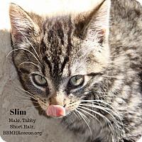 Adopt A Pet :: Slim - Temecula, CA