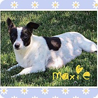 Adopt A Pet :: Maxie - Fort Wayne, IN