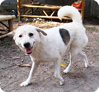 Retriever (Unknown Type) Mix Dog for adoption in Vancouver, British Columbia - Lissy