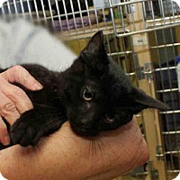Adopt A Pet :: PARKER - Pittsburgh, PA
