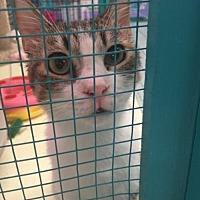 Adopt A Pet :: Prince - Glendale, AZ