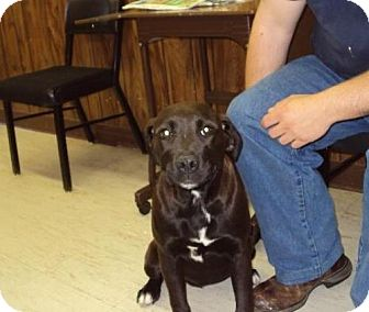 Labrador Retriever Mix Dog for adoption in Mt. Vernon, Illinois - Reeana