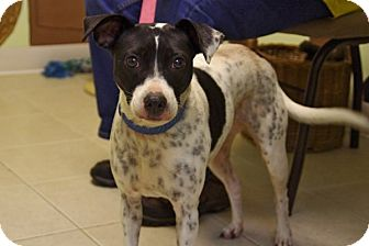 Terrier (Unknown Type, Small) Mix Dog for adoption in Elyria, Ohio - Bailey