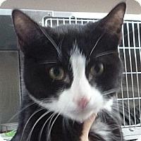 Adopt A Pet :: Broyles - St. Petersburg, FL