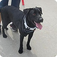 Adopt A Pet :: Archie - Cumming, GA