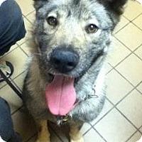 Adopt A Pet :: Delilah (courtesy posting) - Slatington, PA