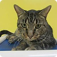Adopt A Pet :: Jimbo - Mobile, AL