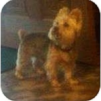 Adopt A Pet :: Ponti - Plainfield, CT