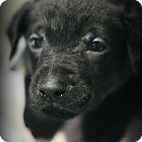 Adopt A Pet :: Noah - Fredericksburg, VA