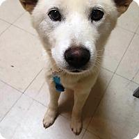 Adopt A Pet :: Jessi - La Mirada, CA