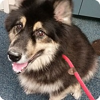 Adopt A Pet :: Shelby - Gainesville, FL