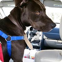 Adopt A Pet :: Zena - Cerritos, CA