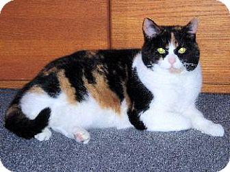 Calico Cat for adoption in Walnutport, Pennsylvania - Porscha