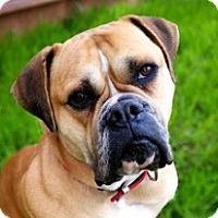Adopt A Pet :: Diamond - Chico, CA