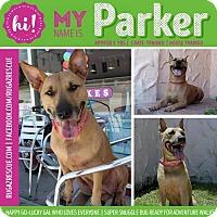 Adopt A Pet :: Parker - New Port Richey, FL