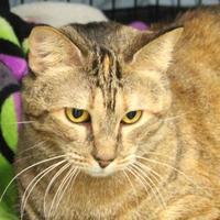 Adopt A Pet :: Ali - Pittsford, VT