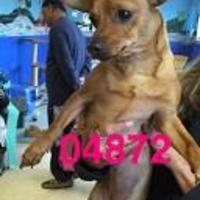 Adopt A Pet :: BABY - Kiln, MS
