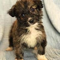 Adopt A Pet :: Zion - santa monica, CA