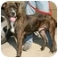 Photo 2 - Boxer/American Pit Bull Terrier Mix Dog for adoption in Berkeley, California - Lenny