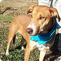 Adopt A Pet :: ASTER/Sweetest Dog EVER! - Glastonbury, CT