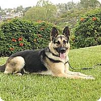 Adopt A Pet :: Reba - Laguna Niguel, CA