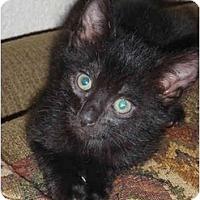 Adopt A Pet :: Zorro - Modesto, CA