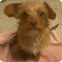Adopt A Pet :: Lizzie - Phoenix, AZ