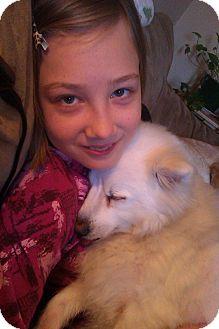 Spitz (Unknown Type, Small) Mix Dog for adoption in Cornwall, Ontario - Bizou