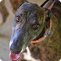 Adopt A Pet :: Crocket - Pearl River, LA