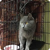 Adopt A Pet :: GRAYSON - 2015 - Hamilton, NJ