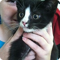 Adopt A Pet :: Simon Says - Riverhead, NY