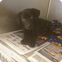 Adopt A Pet :: Maya - Fair Oaks Ranch, TX