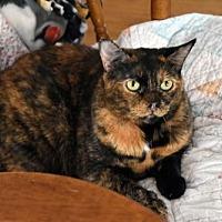 Adopt A Pet :: Daisy - Sarasota, FL