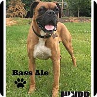Adopt A Pet :: Bass Ale - Woodinville, WA