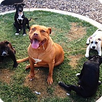 Adopt A Pet :: Litter of FOUR - Rancho Cucamonga, CA