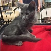 Adopt A Pet :: Galenka - Kennedale, TX