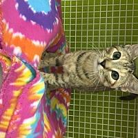 Adopt A Pet :: Shamrock - San Antonio, TX