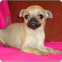 Adopt A Pet :: Haley - Plainfield, CT
