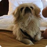 Adopt A Pet :: Connor - Richmond, VA