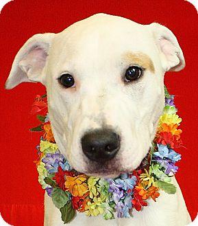 Labrador Retriever Mix Dog for adoption in Jackson, Michigan - Jeff