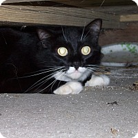 Adopt A Pet :: Wendy - Ravenel, SC